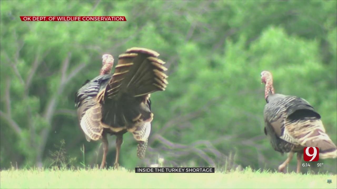 State Wildlife Commission Eyes Turkey Changes Amid Population Decline