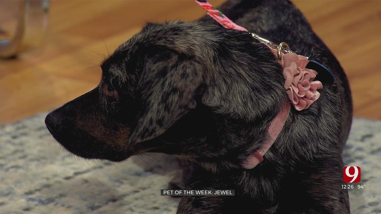 Pet Of The Week: Jewel