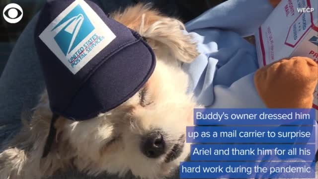 WATCH: A Dog & A Mailman Develop A Friendship During Pandemic