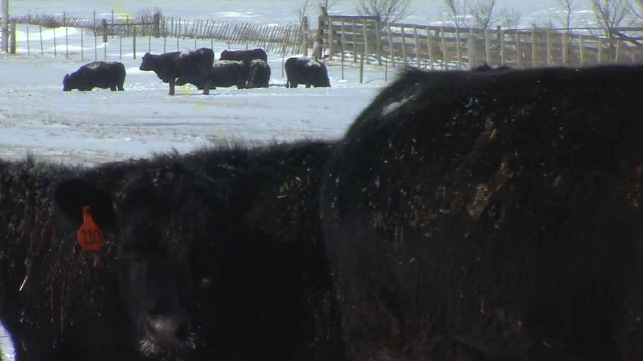 Oklahoma Ranchers Brave Subzero Temperatures