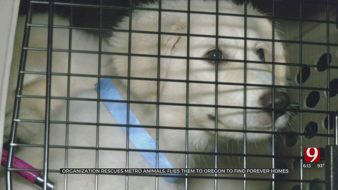 Animal Rescue Organization In Edmond Helps Sheltered Animals Find New Homes