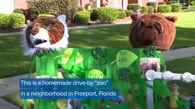 WATCH: Florida Residents Create Drive-By 'Zoo' In Neighborhood