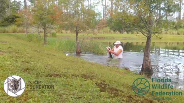 Florida Man Saves Dog From Alligator