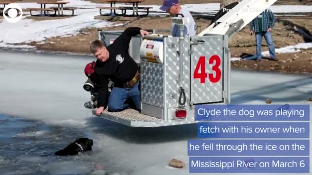 WATCH: Firefighters Rescue Dog From Icy River