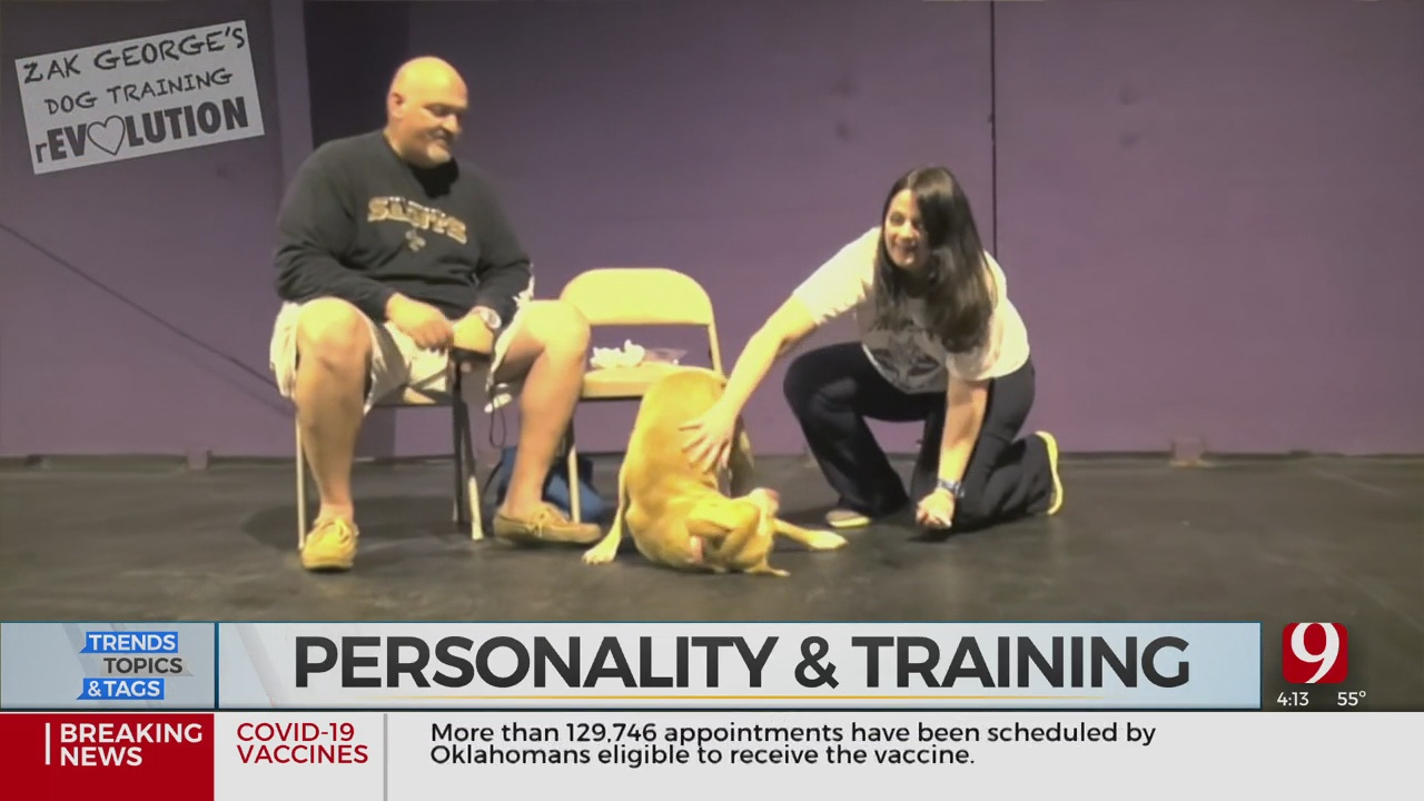 Trends, Topics & Tags: Human Personality & Dog Training