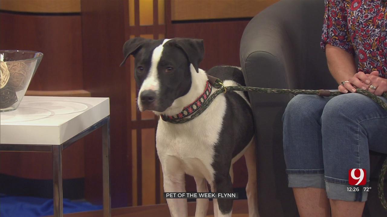 Pet Of The Week: Flynn