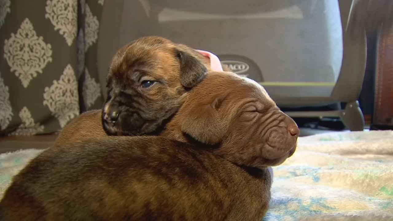 Abandoned Puppies Rescued After Being Left To Freeze In NW OKC Walmart Parking Lot