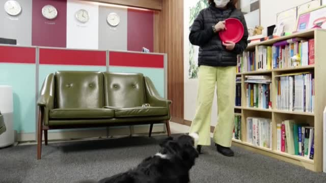New Dog Collar Helps Owners Know How Pet Is Feeling