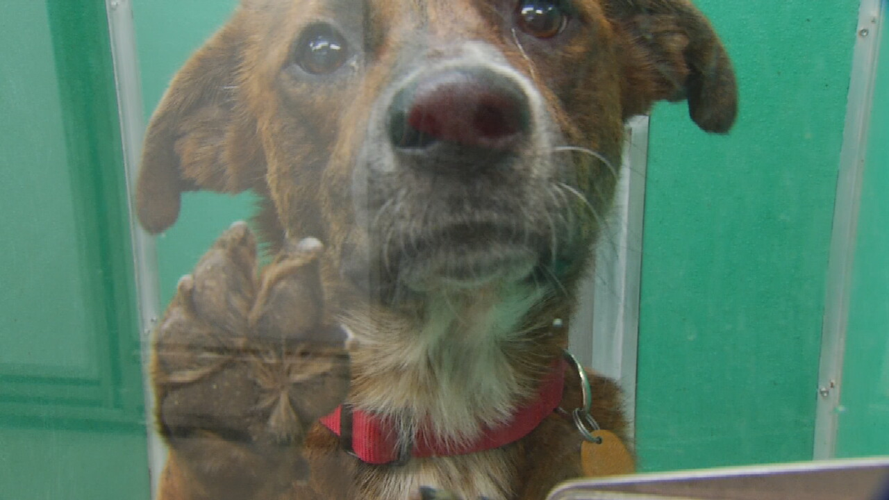 Oklahoma Animal Shelters Seeing Increase In Animal Drop Offs