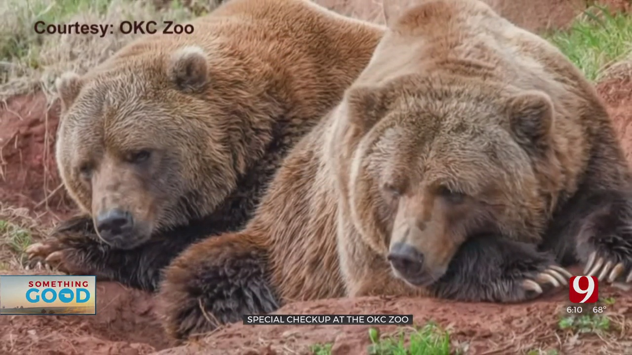 A Bear Of A Day For Visitors At The OKC Zoo