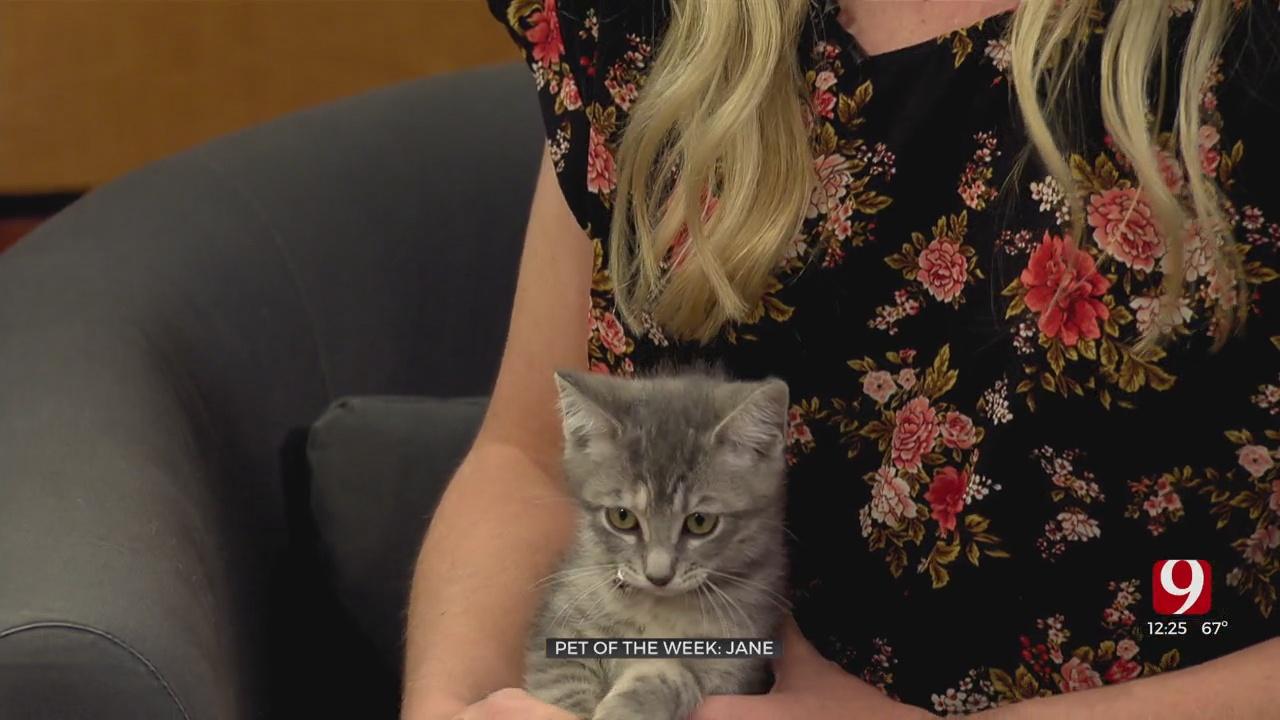 Pet Of The Week: Jane