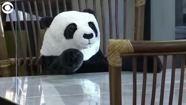 WATCH: Toy Pandas Helping Diners With Social Distancing
