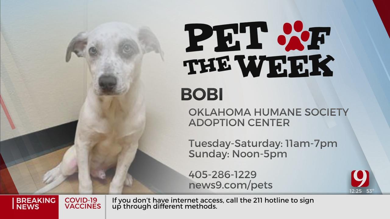 Pet Of The Week: Bobi
