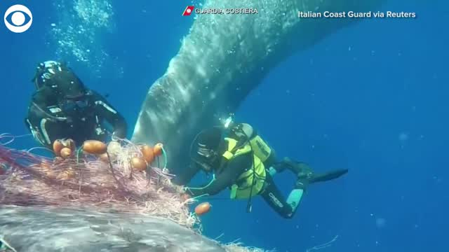 Watch: Whale Rescued From Fishing Net
