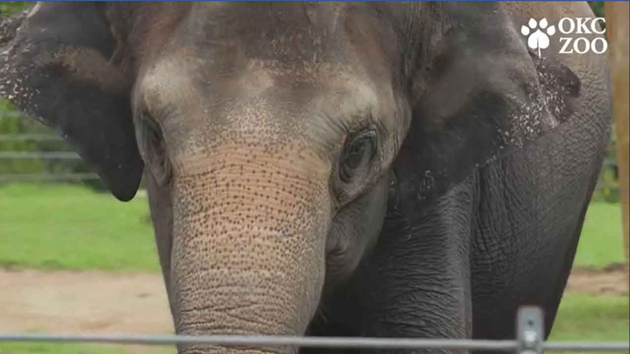 Animals Get In The Spirit For Haunt The Zoo In OKC