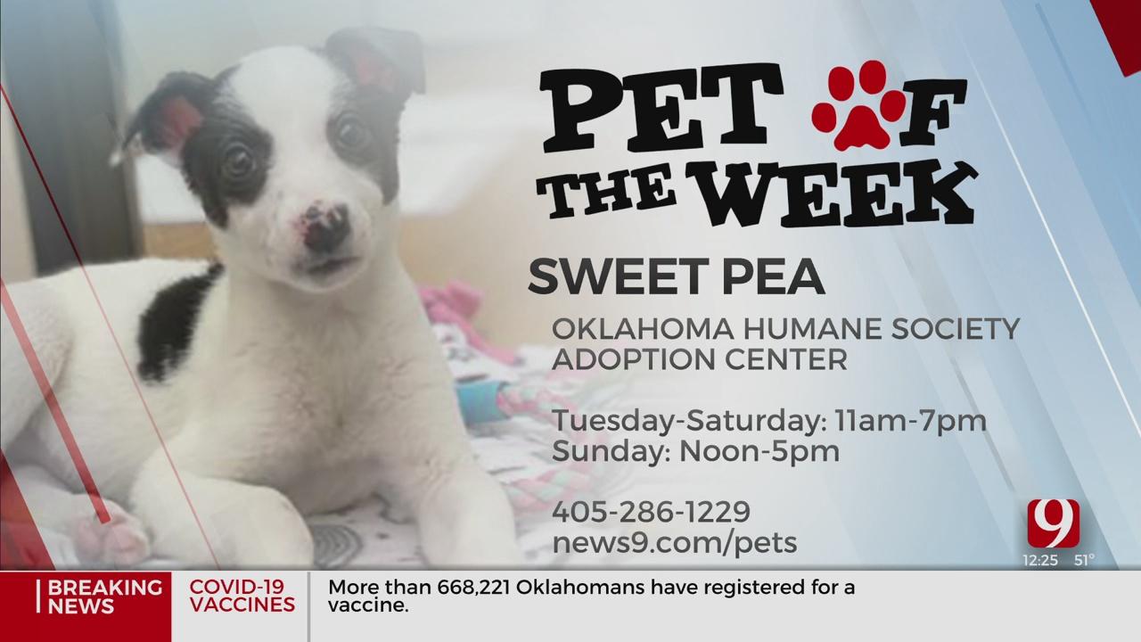 Pet Of The Week: Sweet Pea