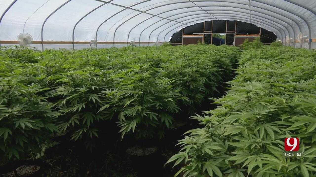 Oklahoma Marijuana Growers Sue OMMA After Agency Revokes 300 Licenses Tied To Single Owner