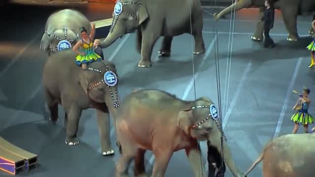 A Look At A Herd Of Former Ringling Bros. Circus Elephants' Home In Florida