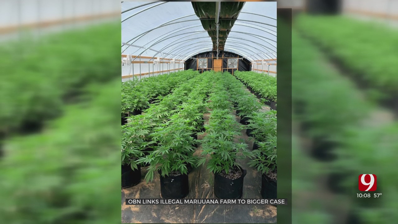 OBN Links Illegal Marijuana Farm To Bigger Case