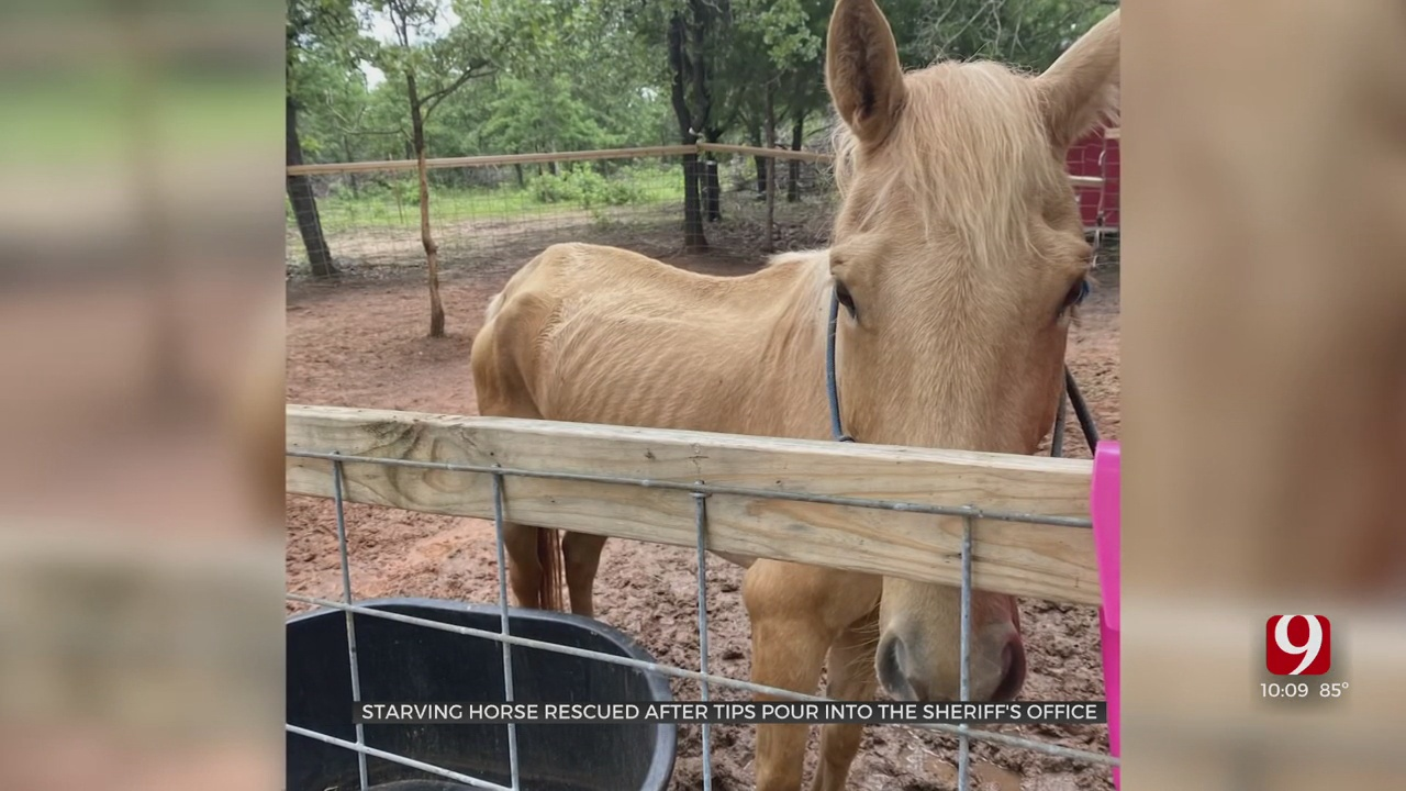 Emaciated Horse Discovered, Rescued In Rural Cleveland County