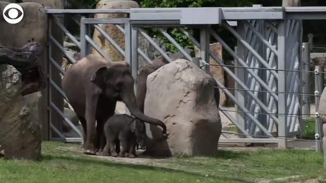 Too Cute! Baby Elephants Explore Outside