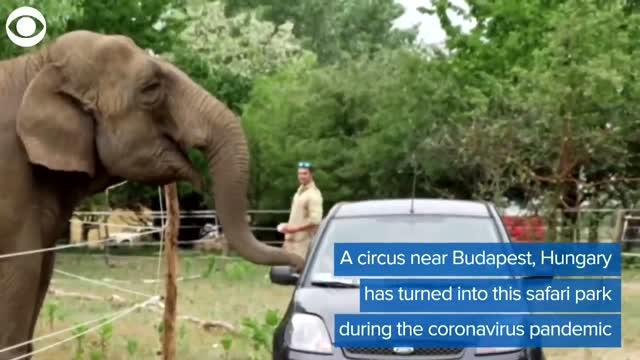 WATCH: Circus Becomes Safari Park During COVID-19 Pandemic