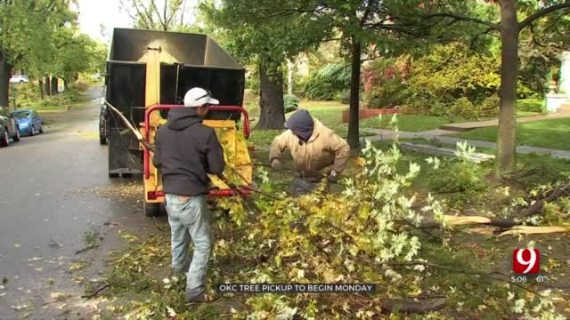 OKC To Begin Tree Debris Clean Up Process On Monday