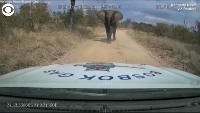 WATCH: Video Shows Moment Elephant Charges At Truck, Rips Off Its Hood