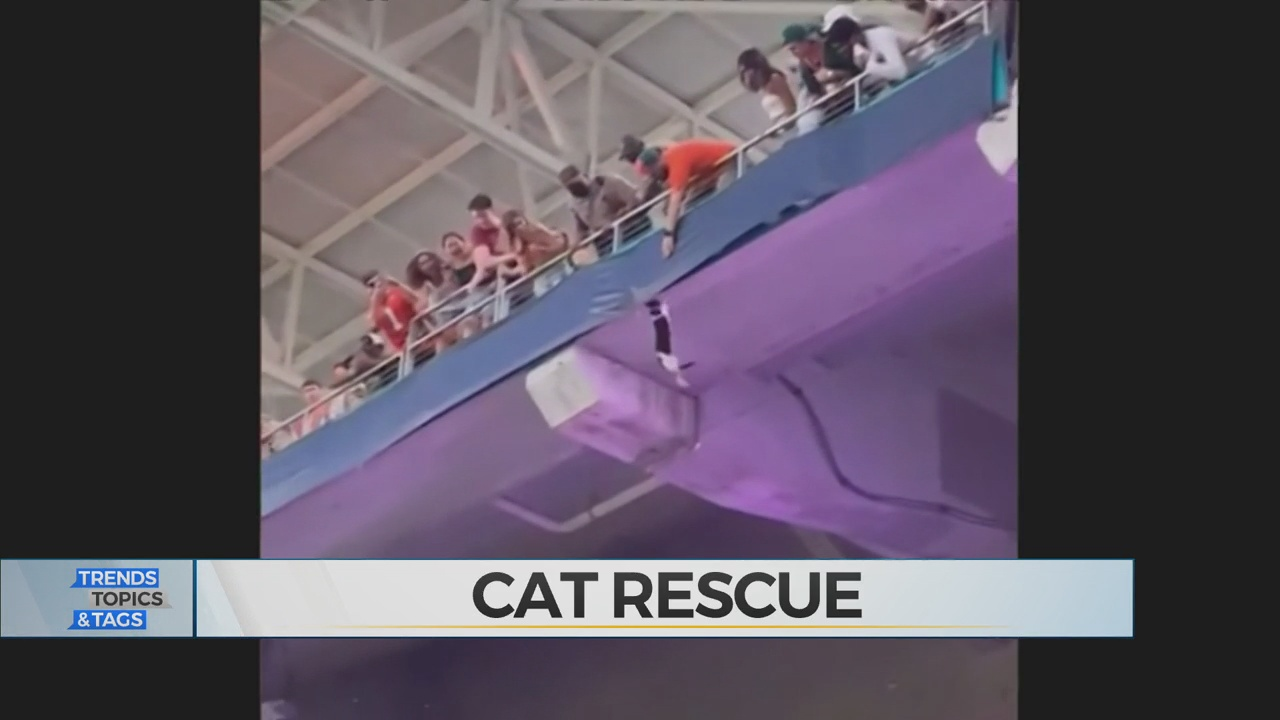 WATCH: Cat Survives Fall From Banister At College Football Game