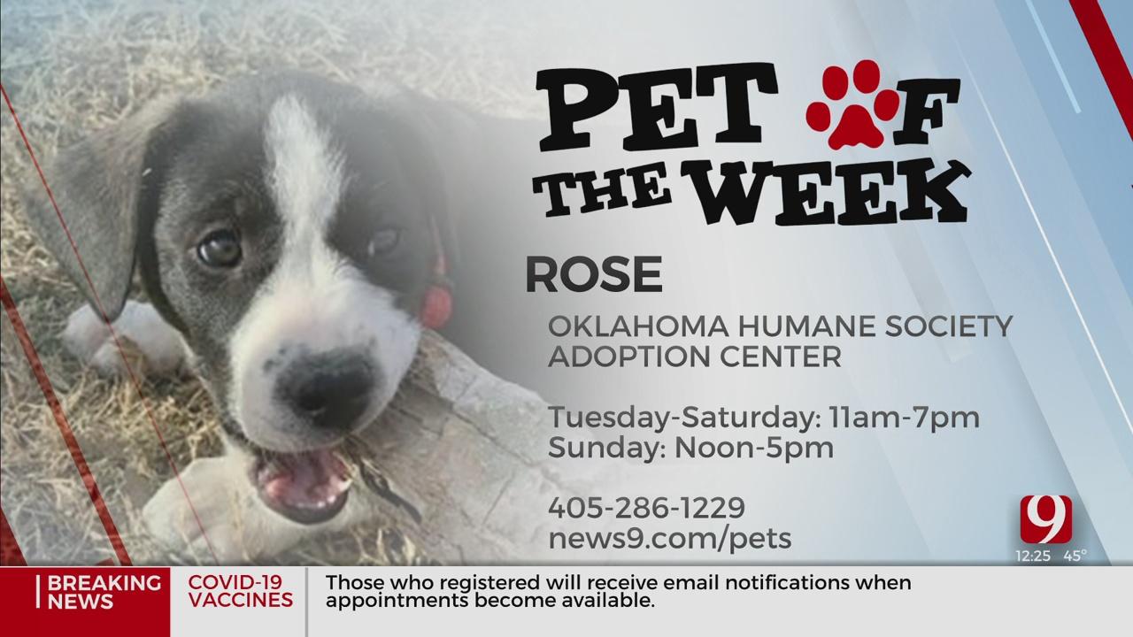 Pet Of The Week: Rose