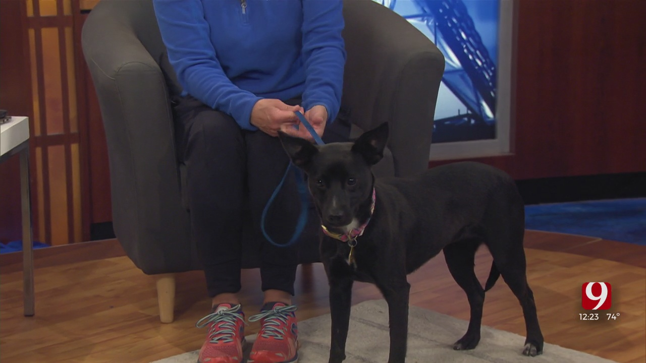 Pet Of The Week: Evelyn