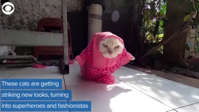 WATCH: Man Creates Stylish Looks For Cats