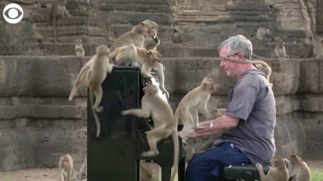 WATCH: Musician Plays Music For Monkeys While In Thailand