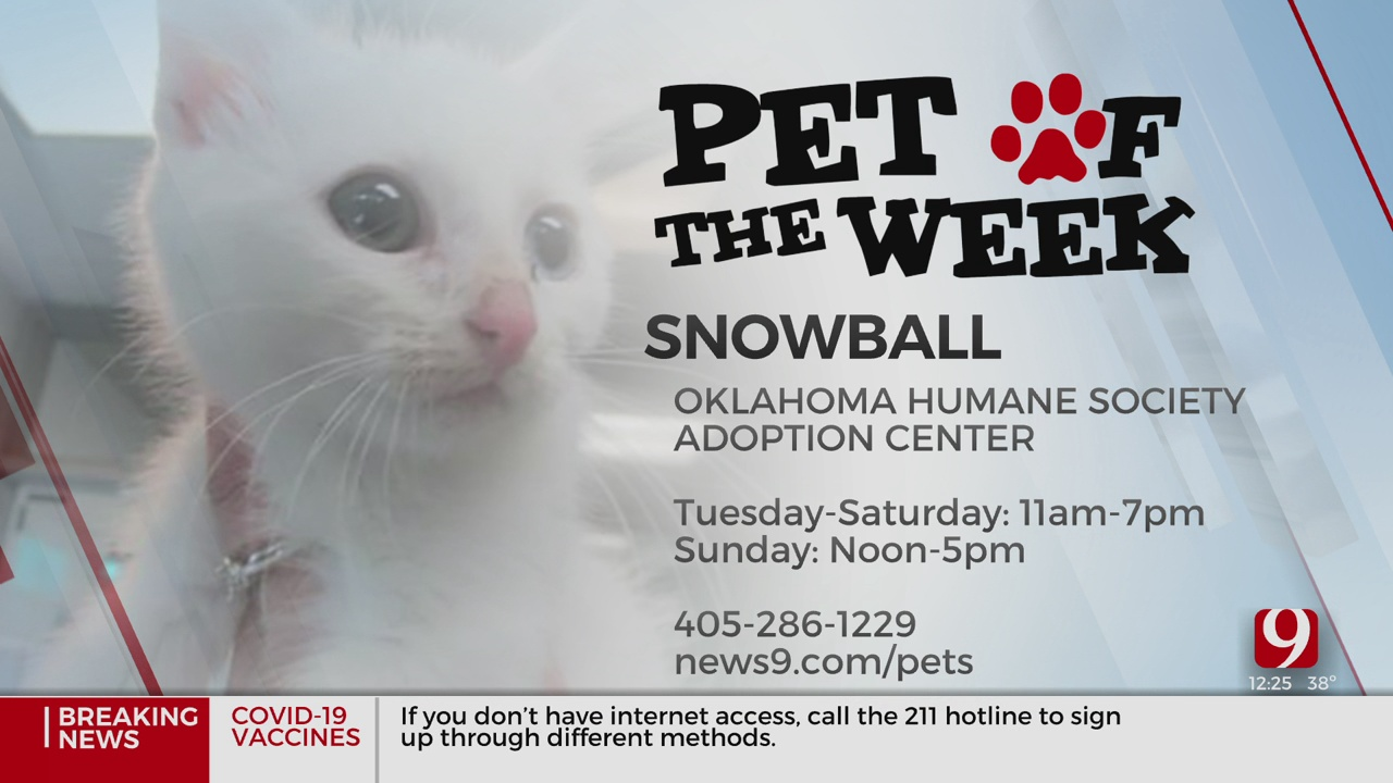Pet Of The Week: Snowball