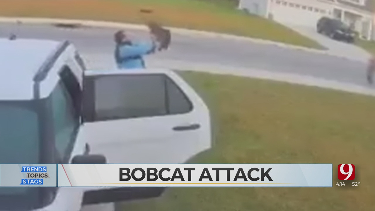 Trends, Topics & Tags: Bobcat Attack