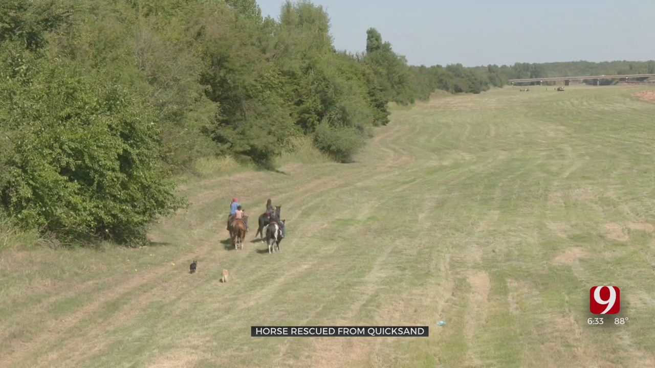 Horse Rescued From Quicksand By Firefighters