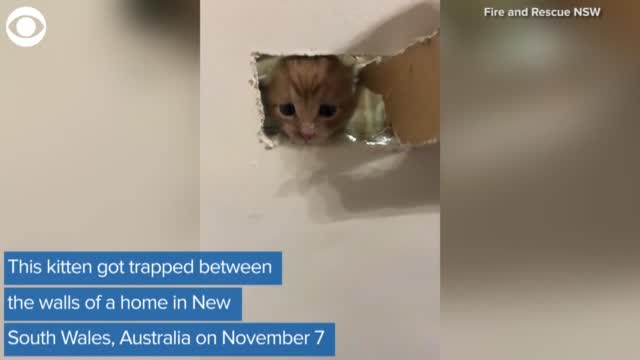 WATCH: Firefighters Save A Kitten Trapped In A Wall