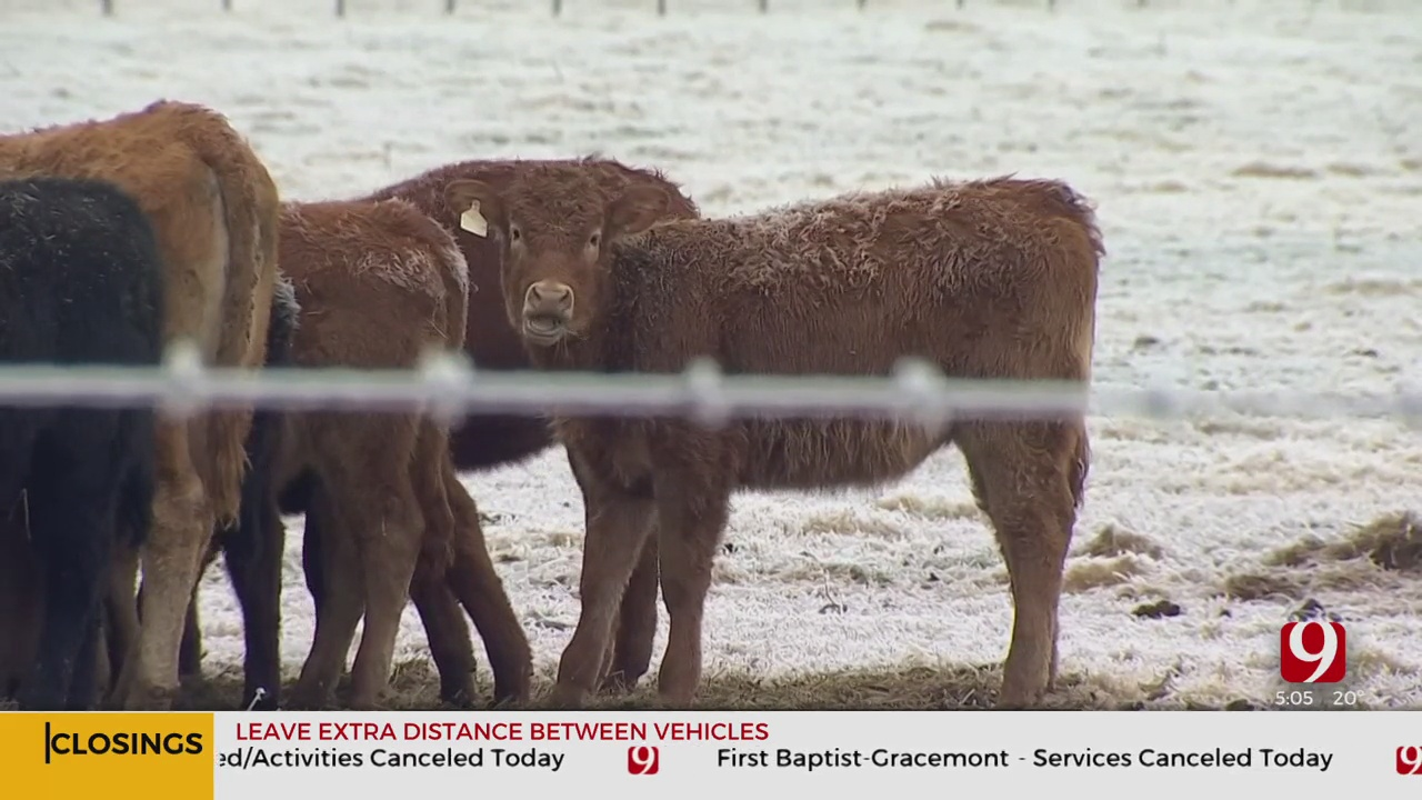 Freezing Weather Expected To Take A Toll On Oklahoma Ranchers, Livestock