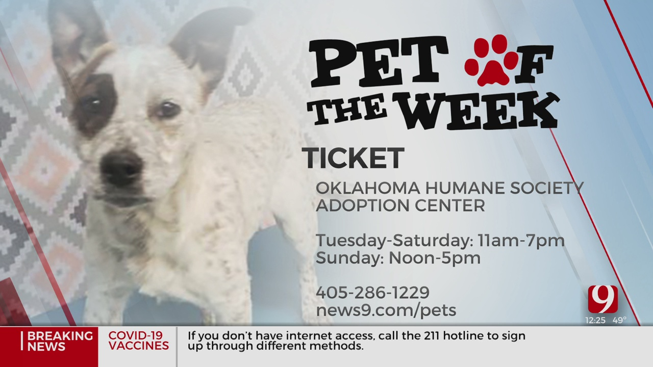 Pet Of The Week: Ticket