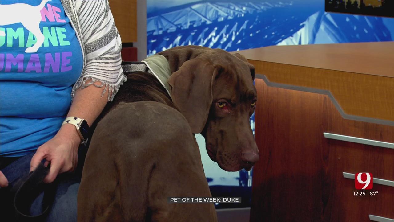 Pet Of The Week: Duke