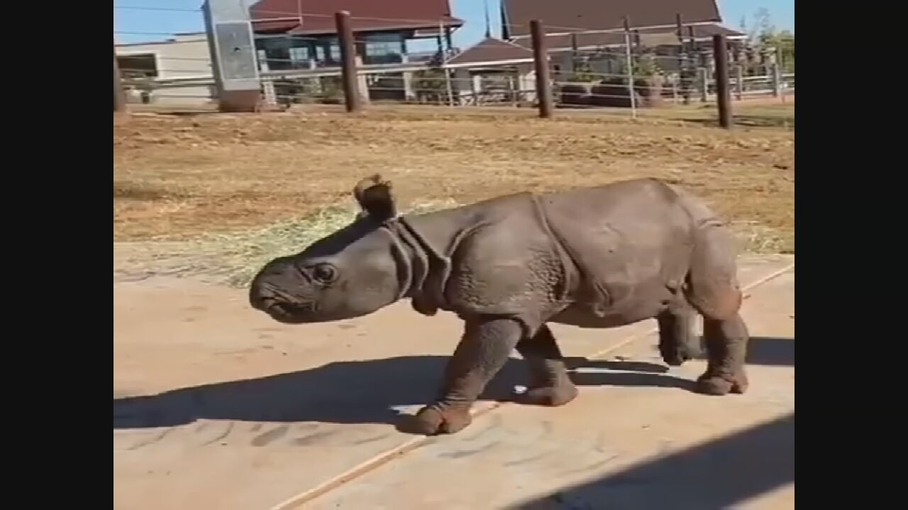 OKC Zoo Announces Name Of New Baby Rhino