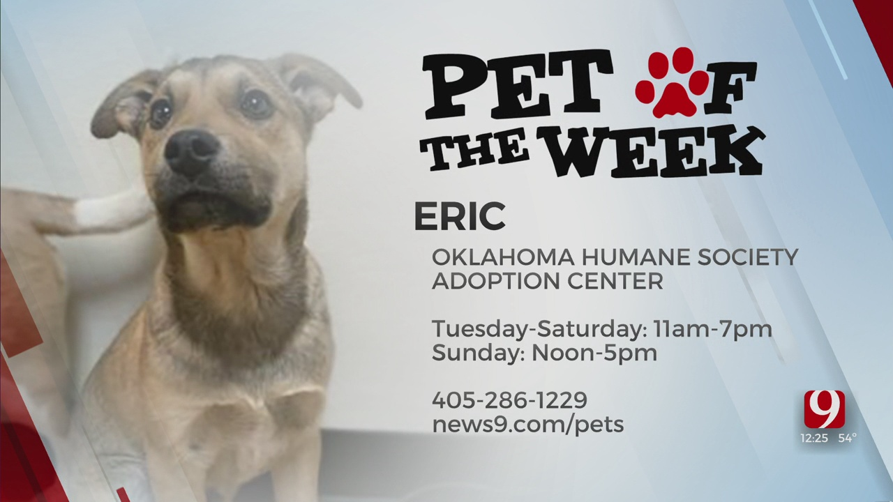 Pet Of The Week: Eric
