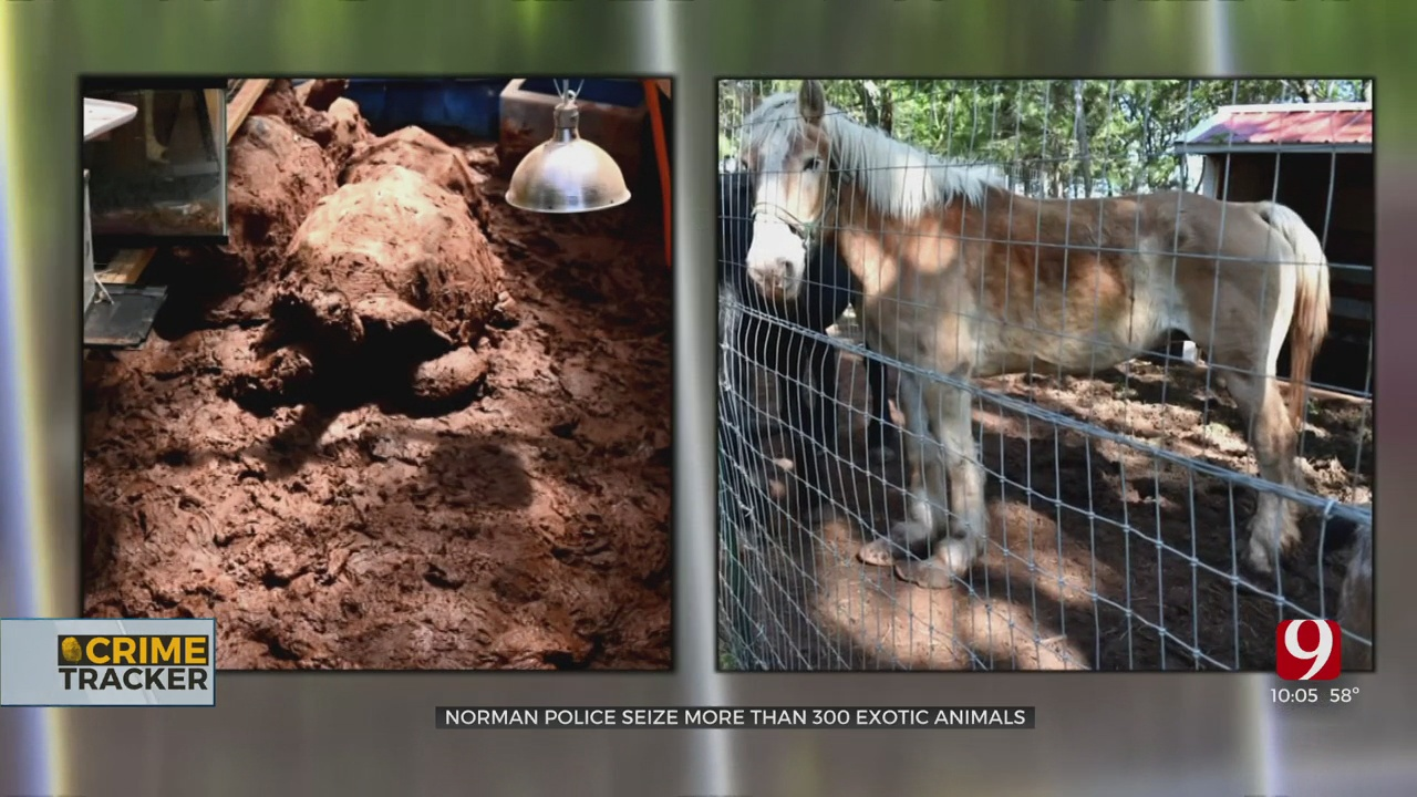 More Than 300 Exotic Animals Seized From Norman Property