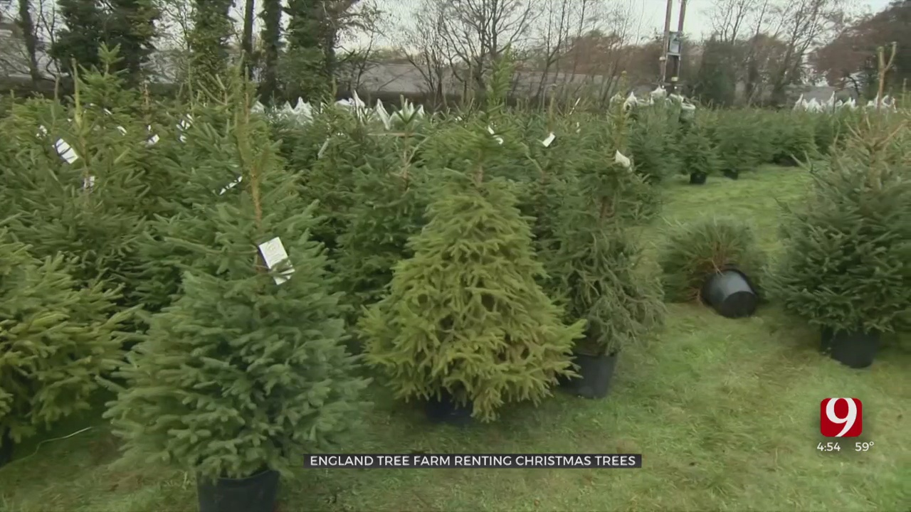 Company Offers Christmas Offers Live Christmas Tree Rental