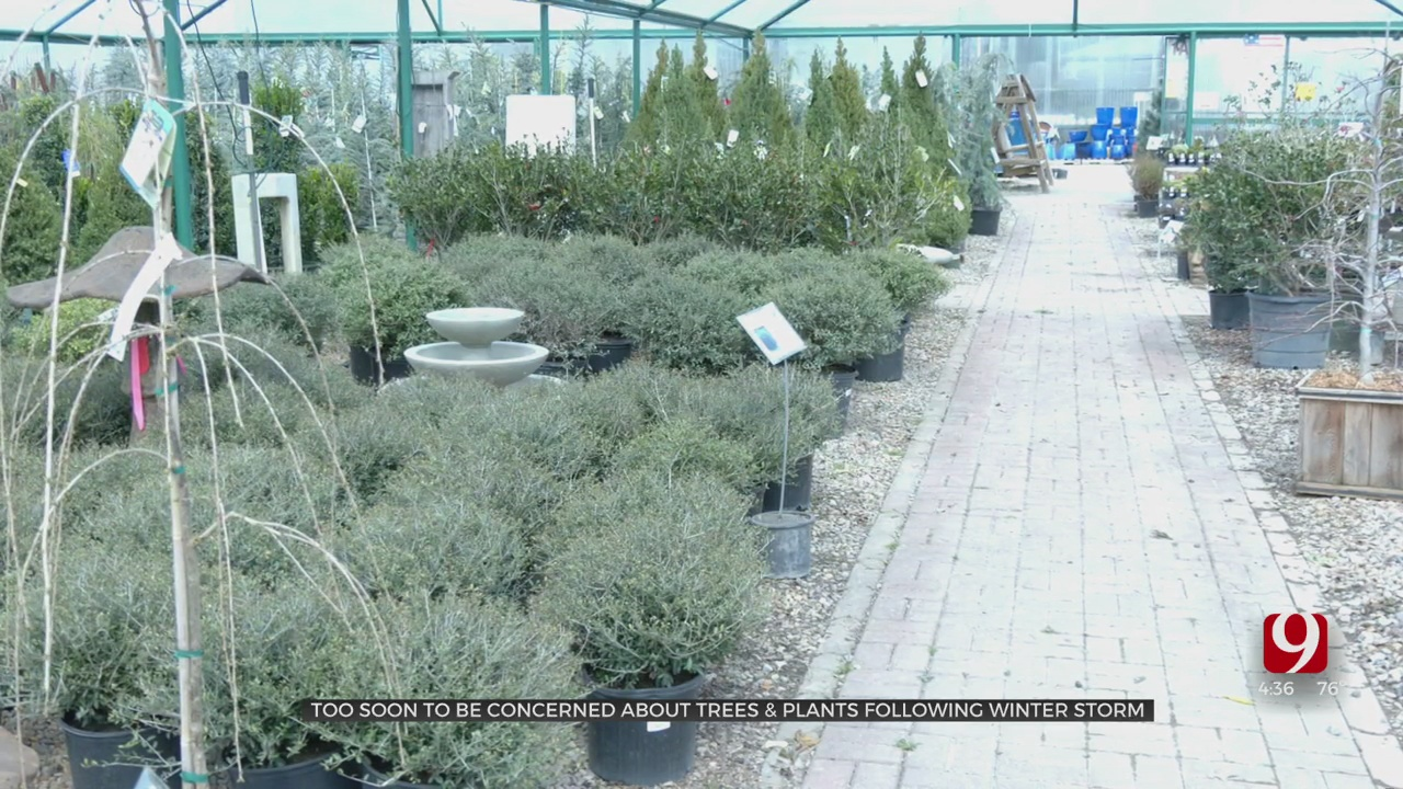 Plant Experts Say It's Too Soon To Be Concerned About Trees, Plants After Winter Storms