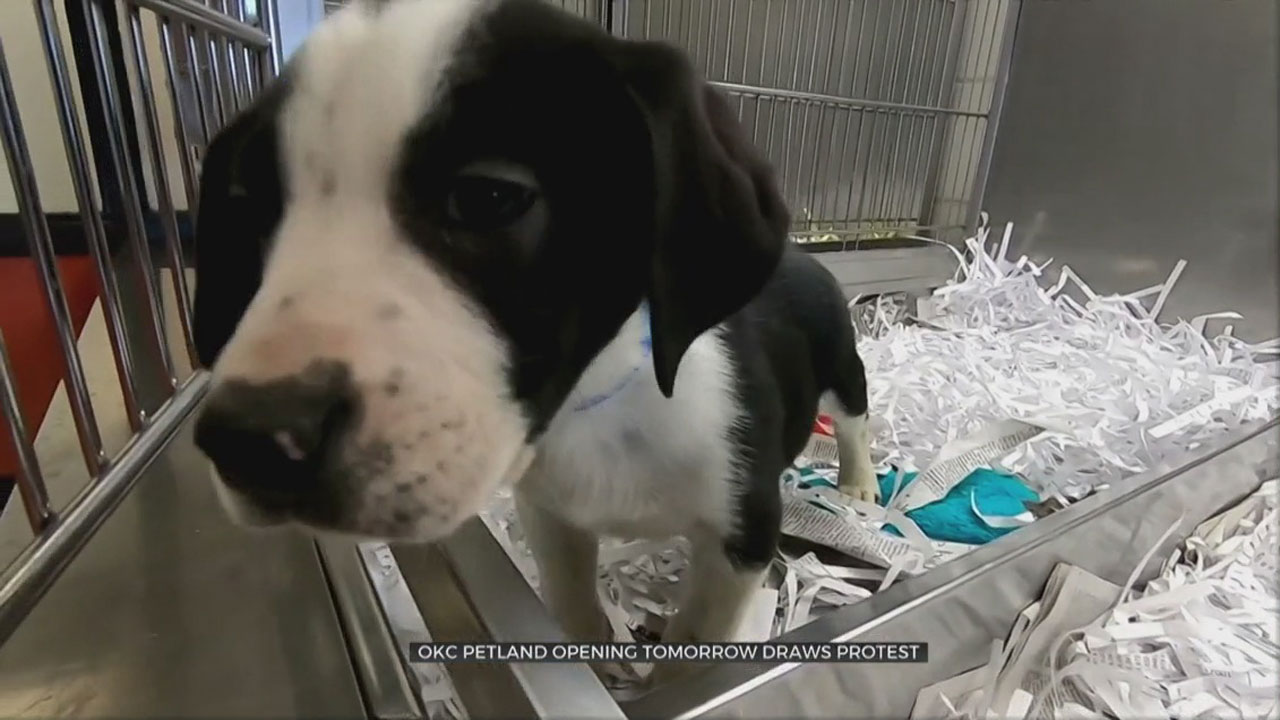 Groups To Protest New Petland Store In NW OKC
