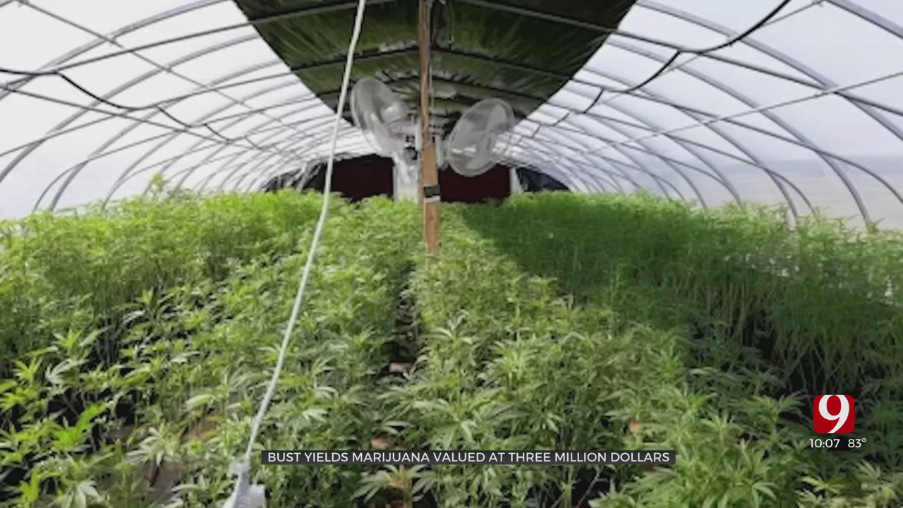 $3 Million In Marijuana Confiscated From Illegal Lincoln County Grow Operation