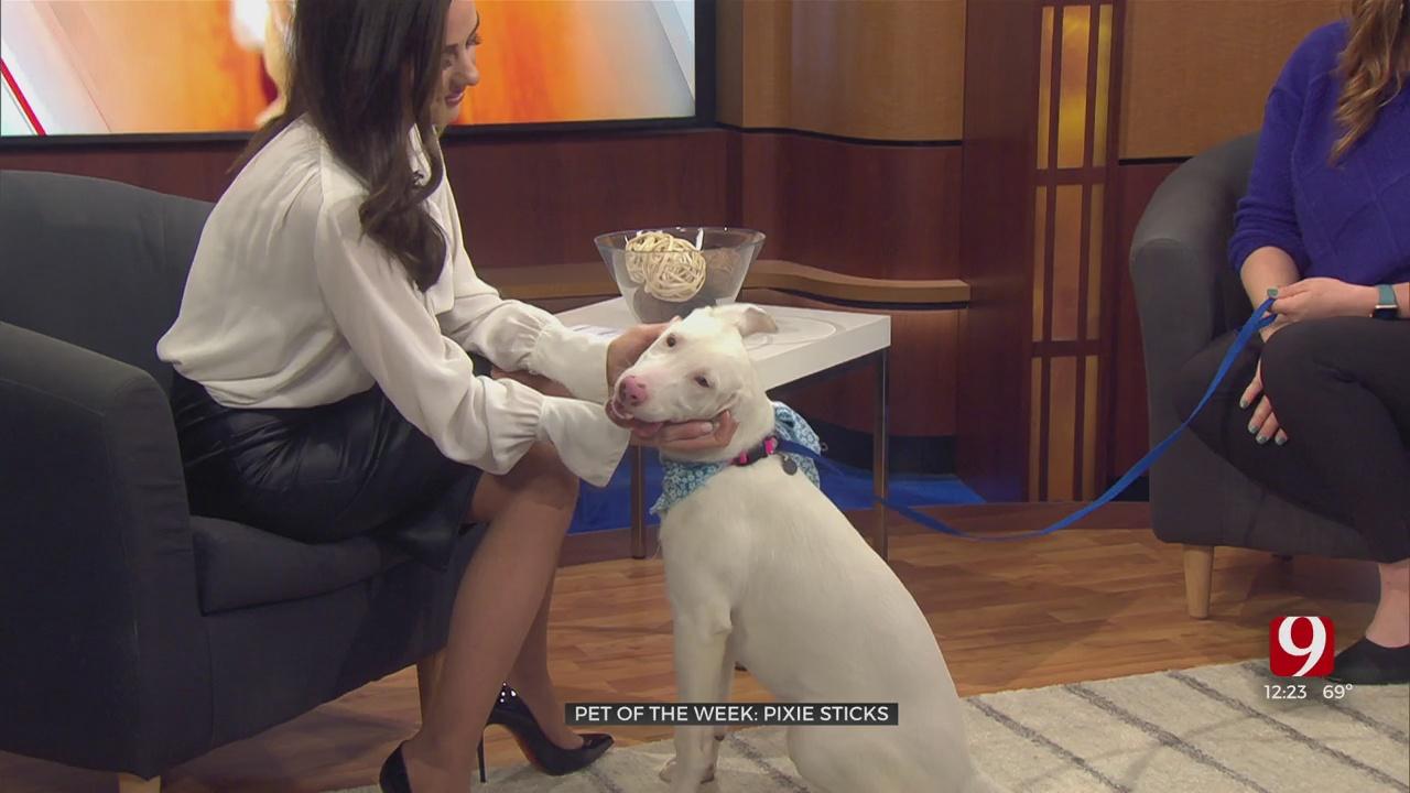 Pet Of The Week: Pixie Sticks