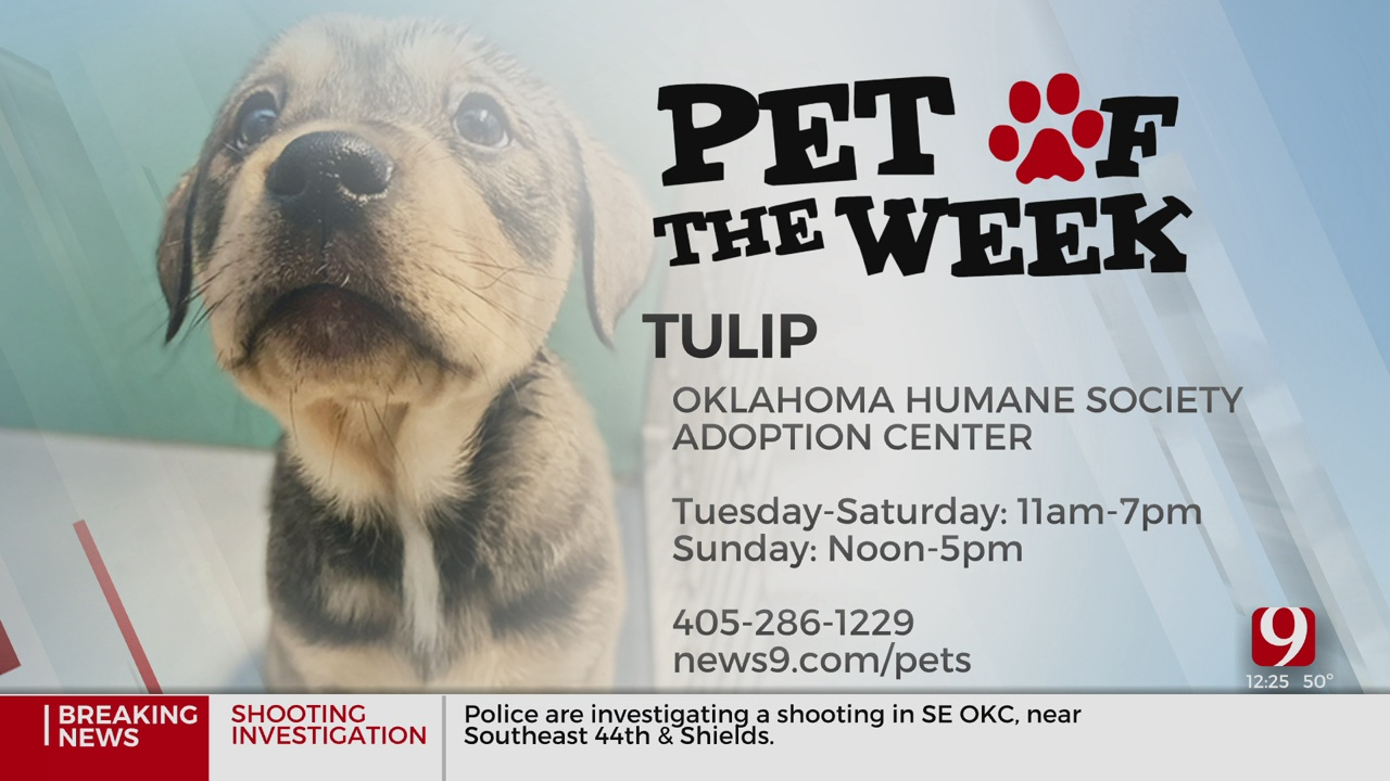 Pet Of The Week: Tulip