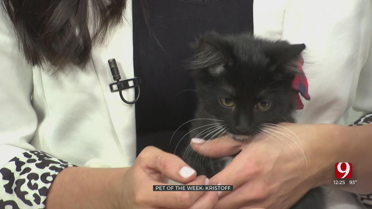 Pet Of The Week: Kristoff